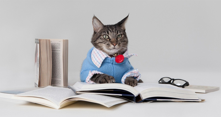 День ответов на вопросы своего кота